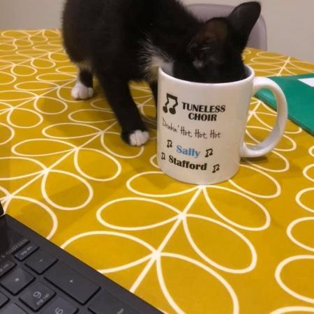 Sally's kitten enjoying a brew
