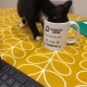 Sally's kitten enjoying a brew